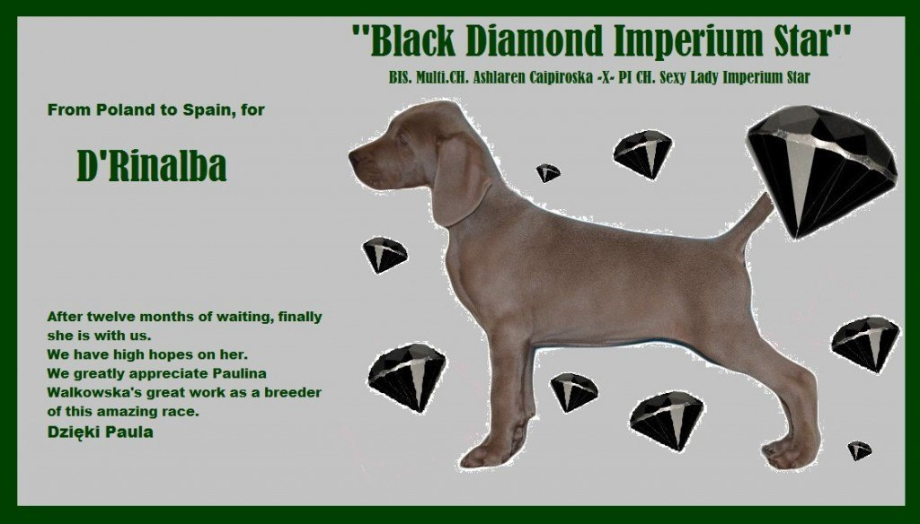 BLACK DIAMOND DEFINITIVO