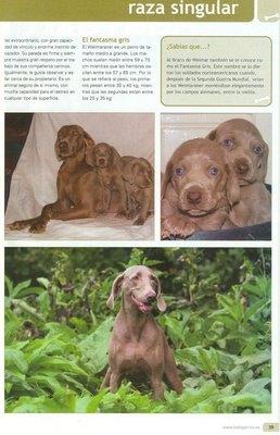 ambarcachorros_revista_todo_perros_400