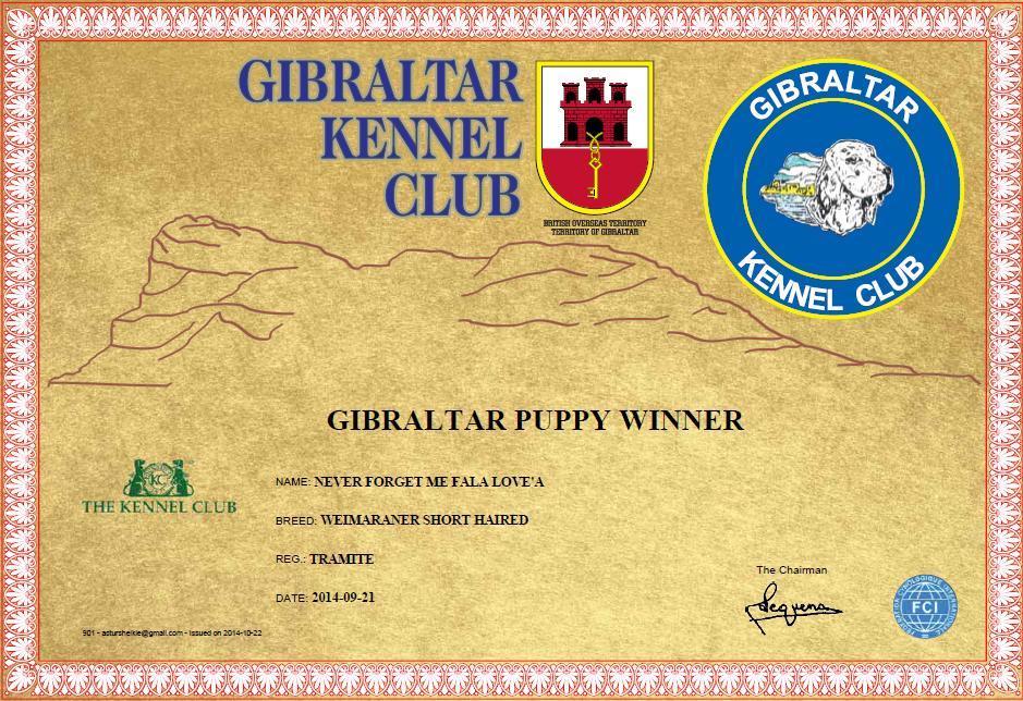 gibraltar_puppy_winner_14_asturshelkie_weimaraner
